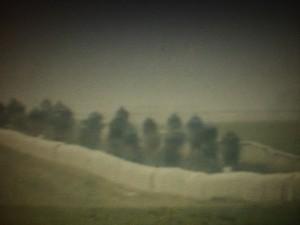 corsa di cavalli nella foschia